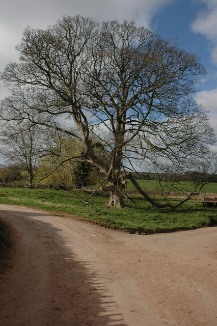 Tree at Lewstone