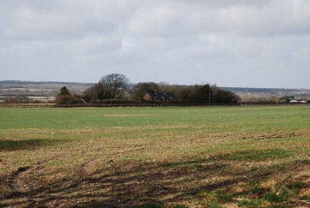 Looking across a wheat field