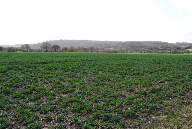 A field of Potatoes north of Selborne