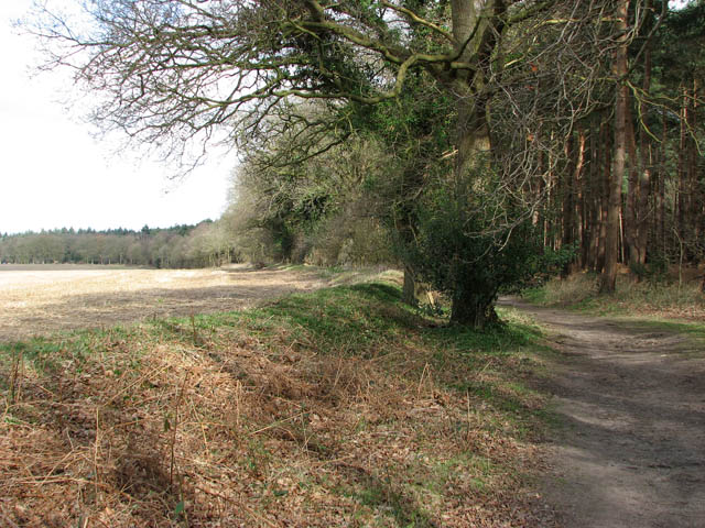 A field/woodland boundary