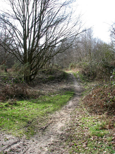 This way to Dole Plantation