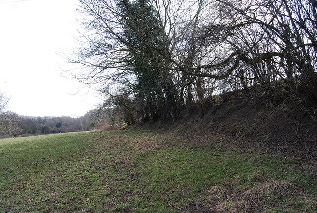 Hedgerow on an embankment