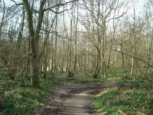 Stubs Wood, Hucking, Kent