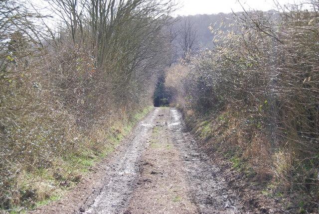 Track entering Selborne