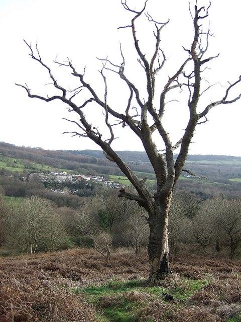 Dead Tree overlooking Waterloo.