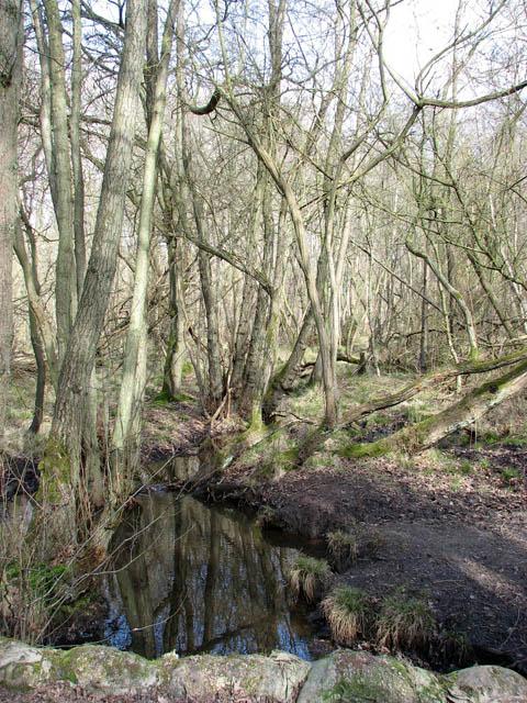 Drain in Houghen Plantation