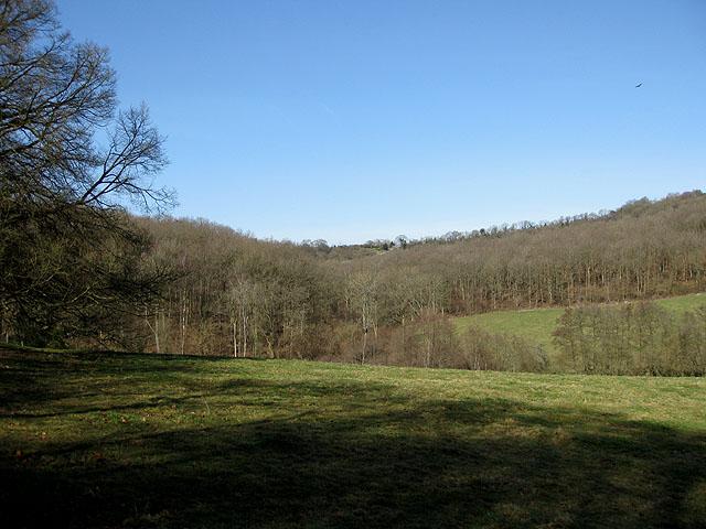 Bear's Wood