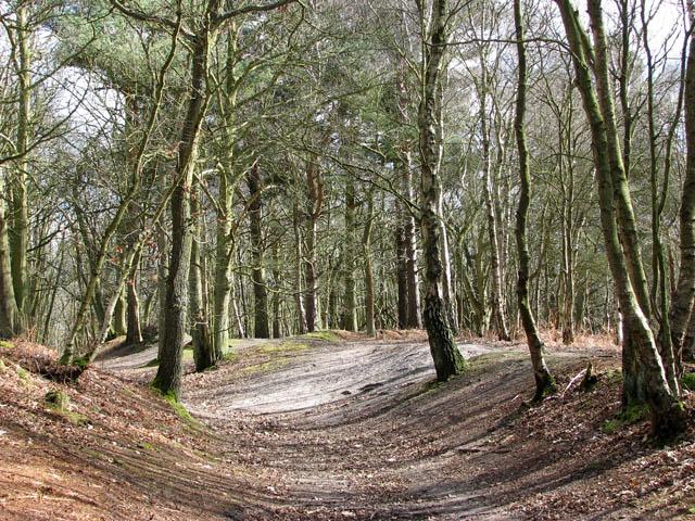 Footpath in Houghen Plantation