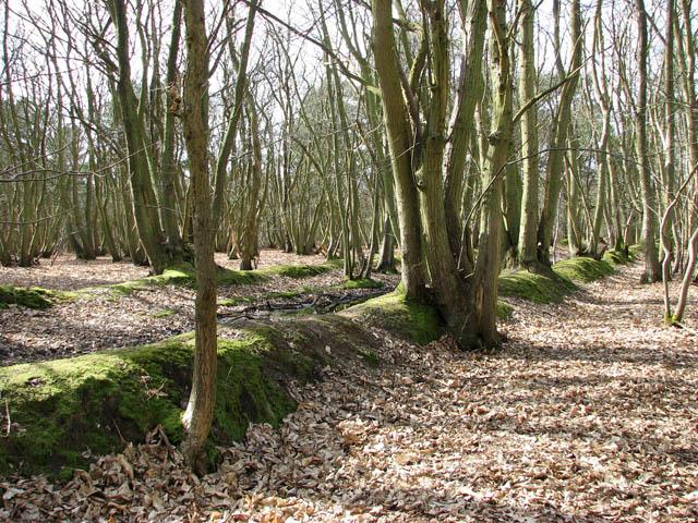 Sunken lane traversing woodland