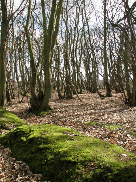Old ridge boundary beside ancient track