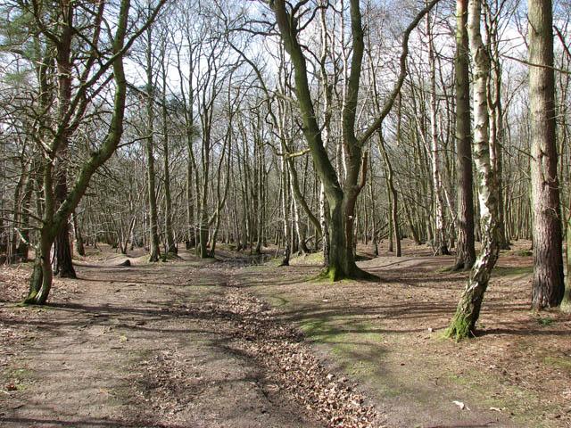 Path through Houghen Plantation