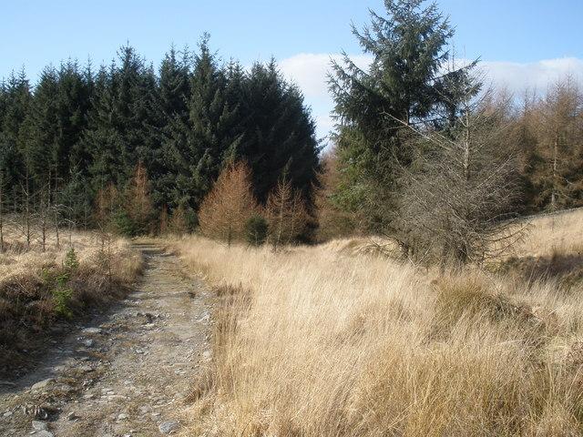 Forest track, above Glenboi