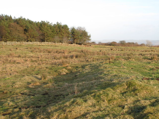 (Site of the) Roman Camp south of Limestone Corner (6)