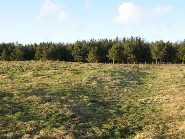 (Site of the) Roman Camp south of Limestone Corner (8)