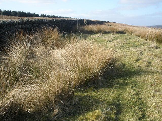 Moorland, above Darranlas