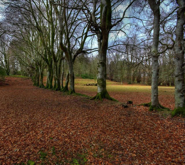 Beech Trees In The Grounds Of Kenmure Castle