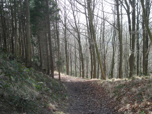 Can't see the wood for the trees in Star's Coppice