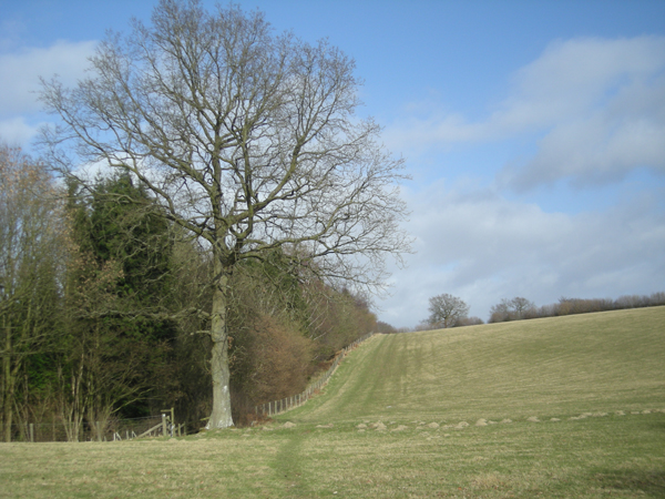 'The Jack Mytton Way' passes Stars Coppice