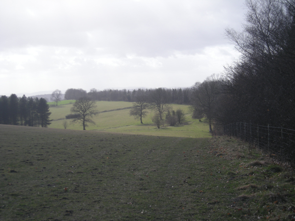 Woodland boundary on 'The Jack Mytton Way'