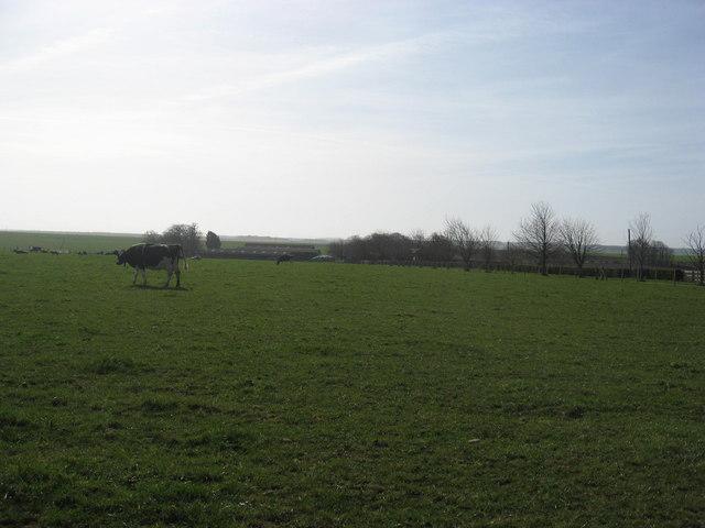 Grazing pasture
