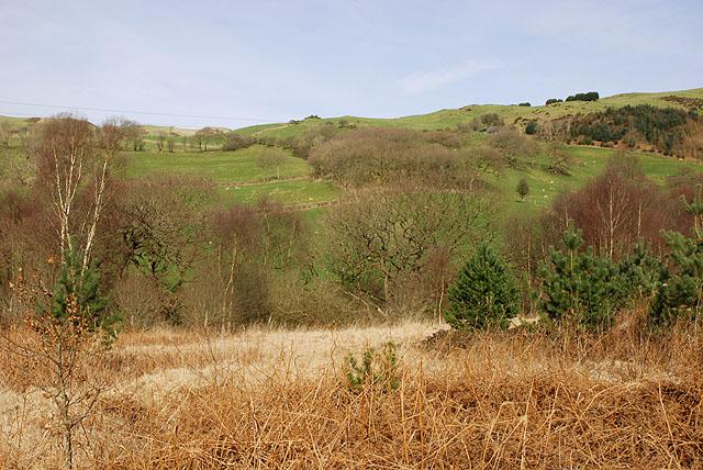 Cwm Cyneiniog near Tynant farm