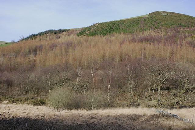 Forestry plantation in Cwm Cyneiniog