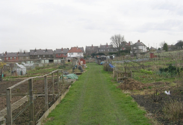 Burras House Allotments - West Chevin Road