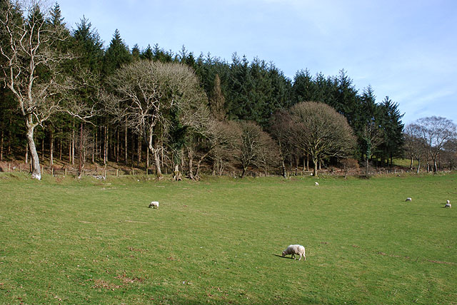 Field south of Cwmere