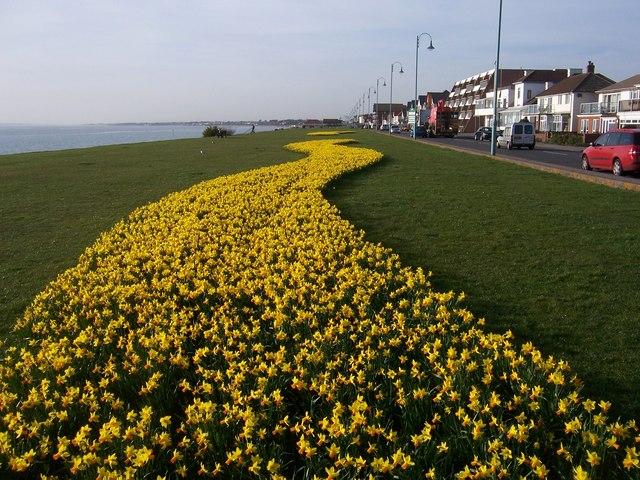 Spring Bulb Display - Lee on The Solent