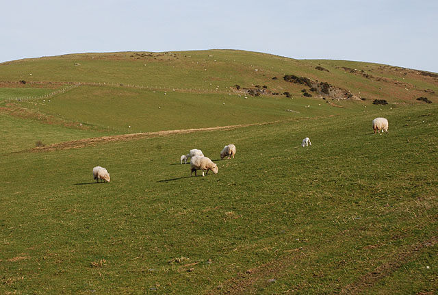 Grazing land east of Bwlch-rosser