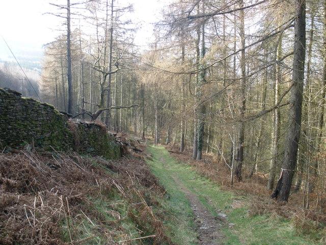 Woodland path, above Glenboi