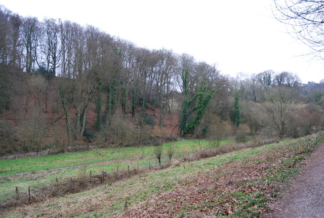 Wooded Valley, East of Selborne (2)
