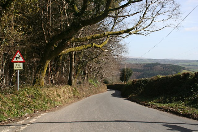 Downhill at Hunter's Oak