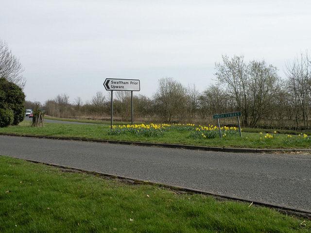 Daffodils at Swaffham Prior High Street