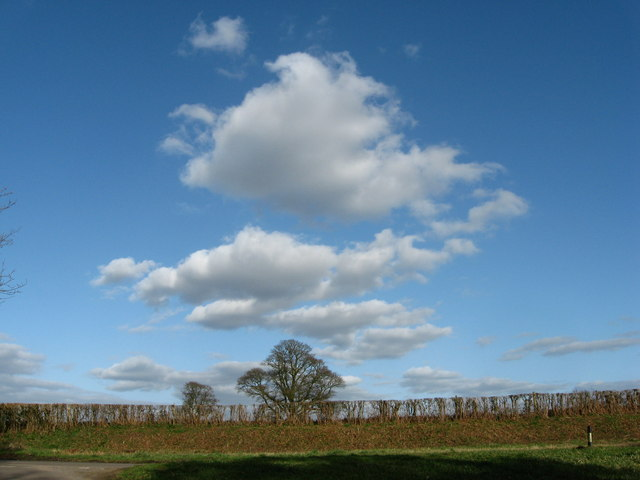 Lane, verge, hedge and trees