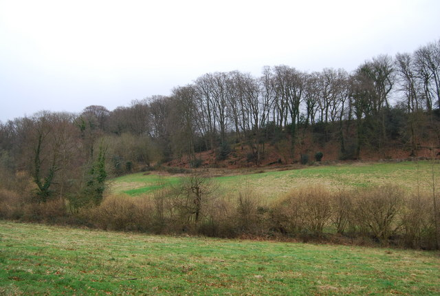 Wooded hillside east of Selborne (2)