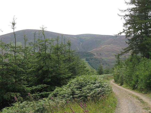 Forest road, Cademuir Plantation