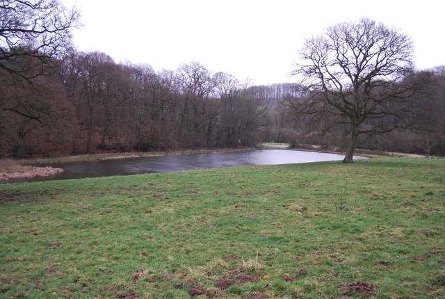 Pond near Coombe Woods