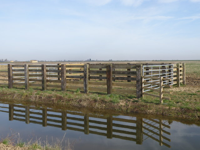 Cattle Handling Pen