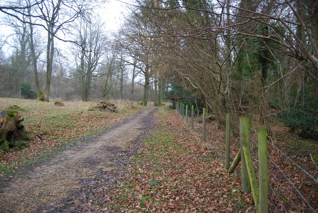 Footpath through Coombe Woods