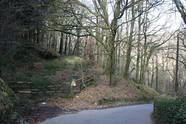 Tavy Valley Woodland