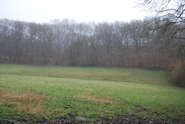 The edge of Coombe Wood