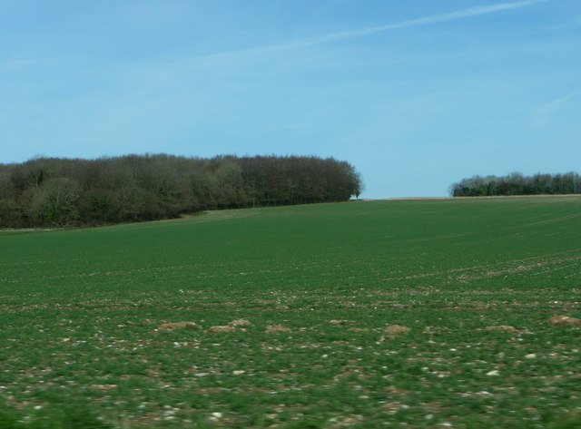 Farmland in front of Trumley Copse