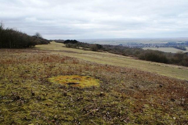 Cleared scrub at Watlington Hill
