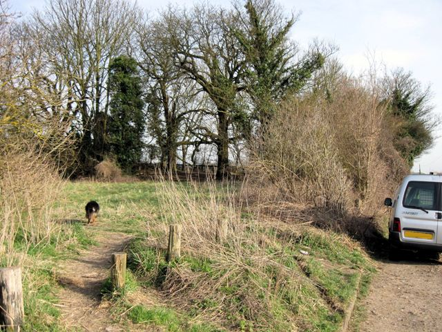 A popular dog-walking spot near Aldbury