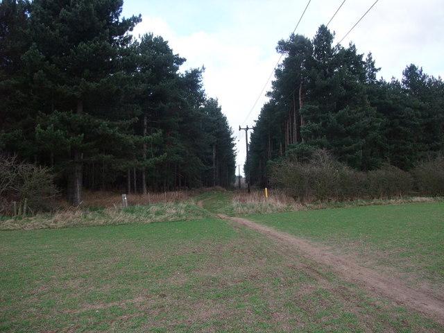 Robin Hood Way entering woods on Spitfire Hill
