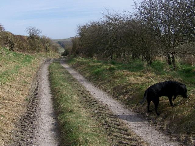 Byway near Norton Bavant