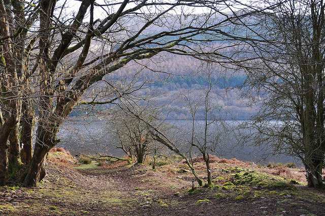 The shore at Talybont Reservoir