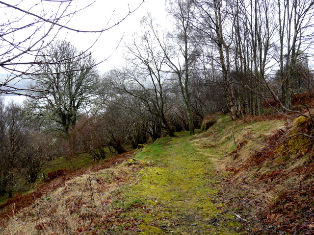 Track in Abriachan Woods