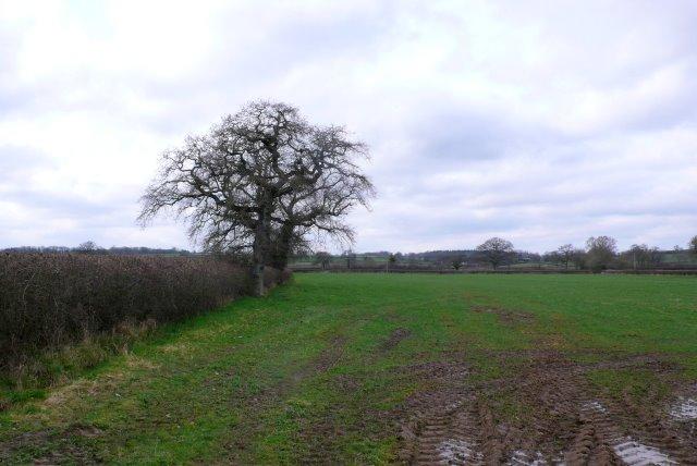 Countryside near Caundle Marsh